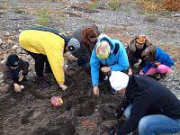 Üle Eesti on suur tammede istutamise kampaania
