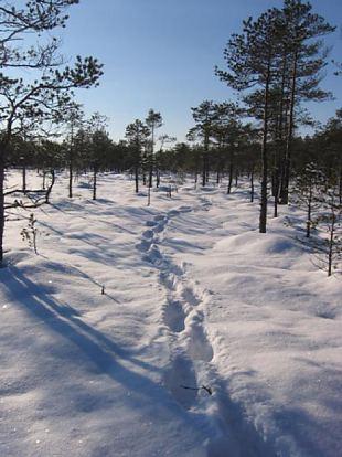 Näpunäiteid Eestis metsa minejale